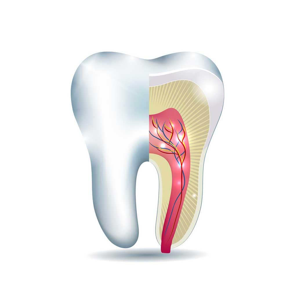 Endodontist Cheltenham